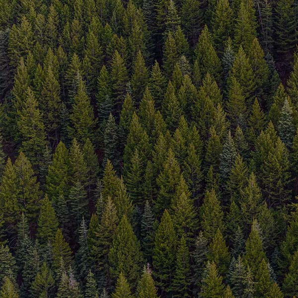 Forêt de conifères vue du ciel