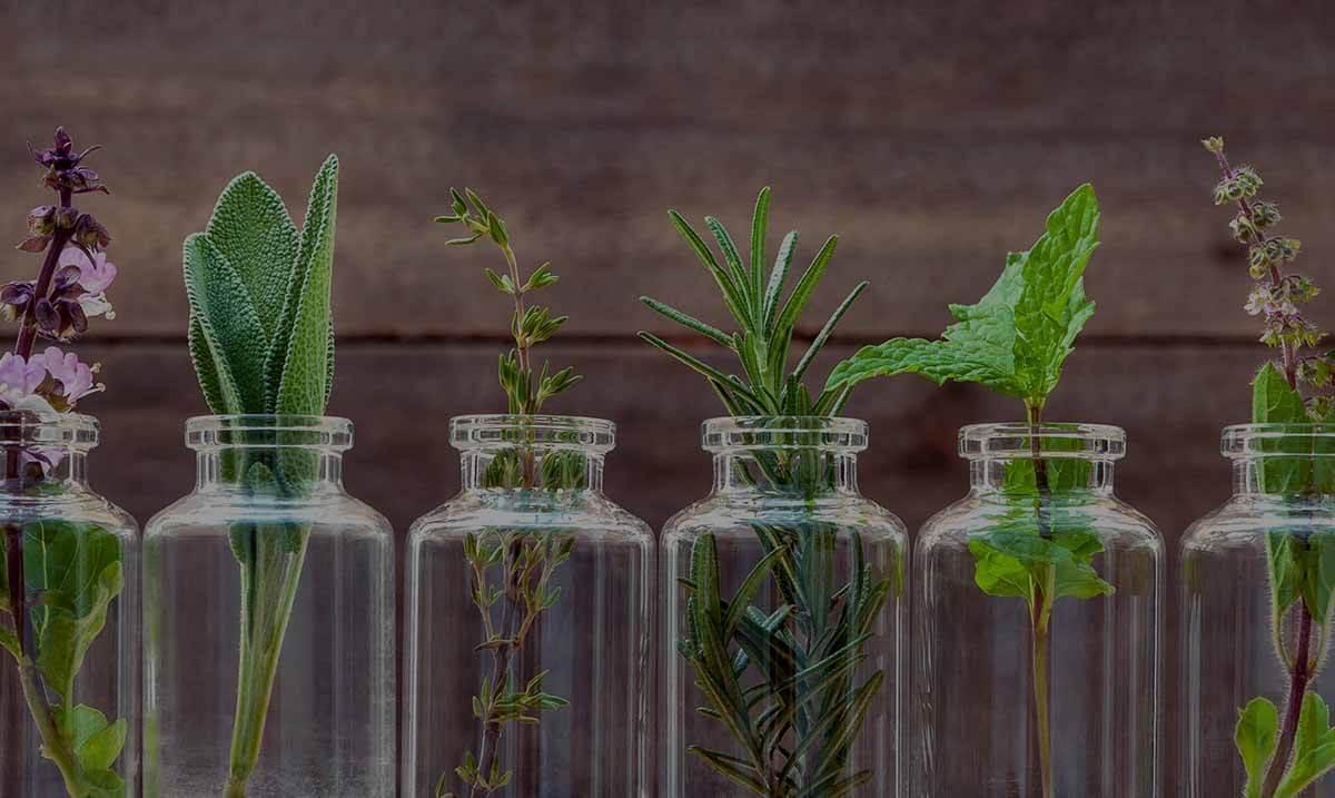 Plantes aromatiques dans des pots en verre